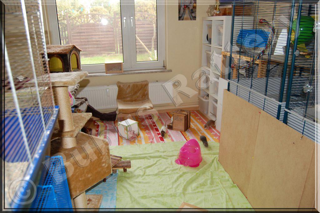 auslauf besch ftigung. Black Bedroom Furniture Sets. Home Design Ideas